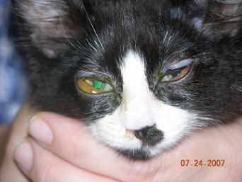 Pink Eyes clipart infected Northwest  Feline Animal Specialists