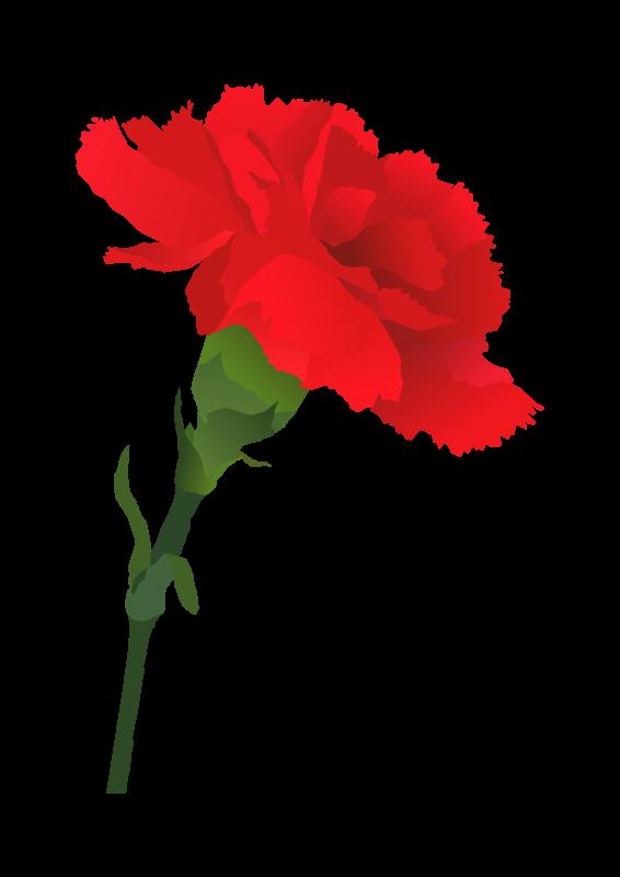 Carnation clipart sympathy Flowers Art Clip  Carnation