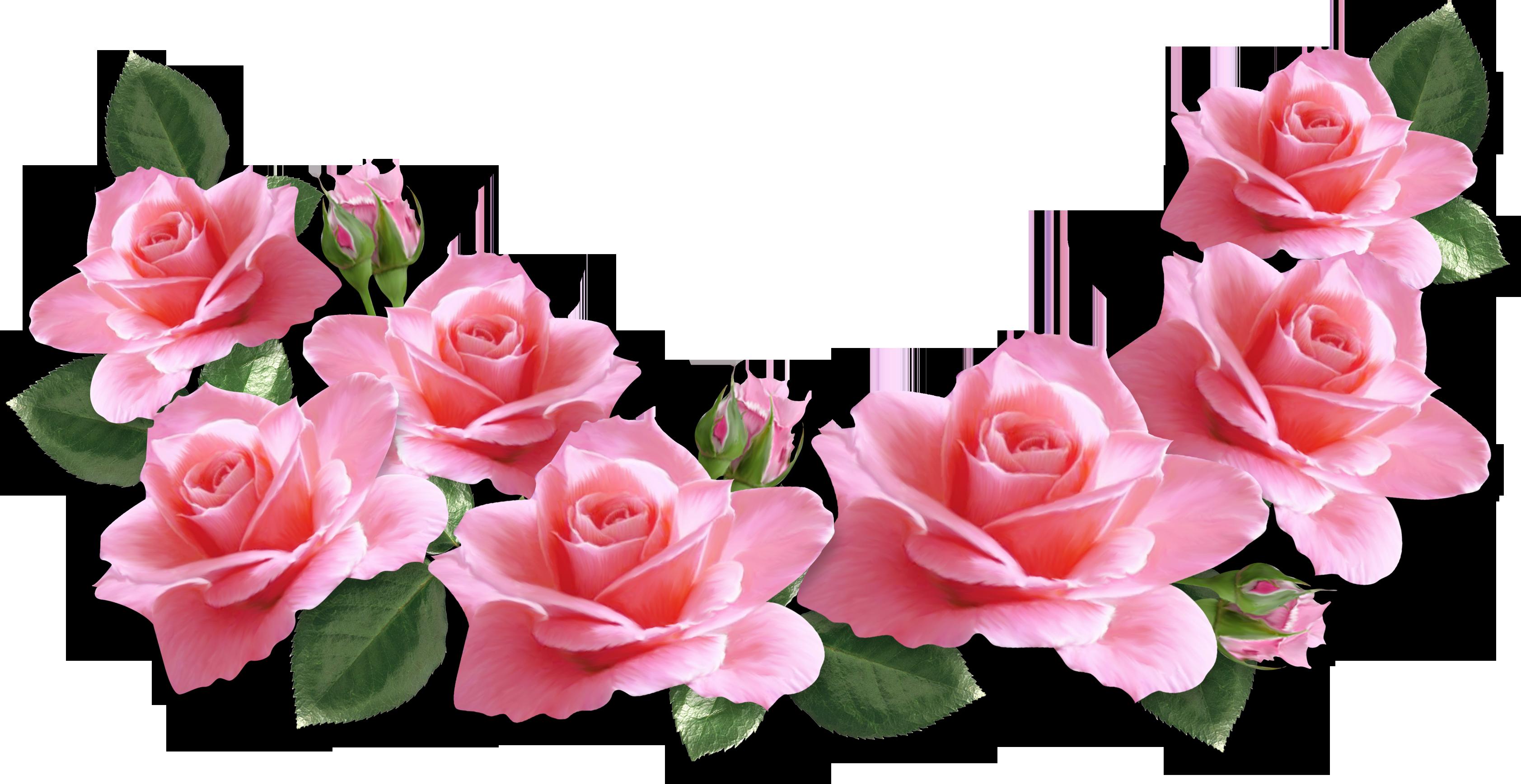 Rose clipart pink rose #15