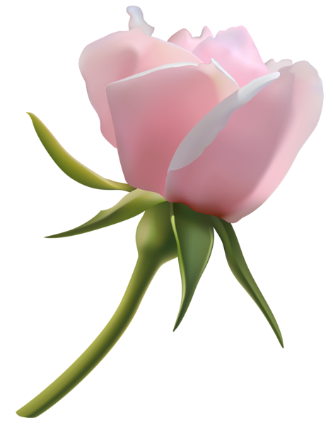 Bud clipart rose bud  Pink pink/rosa Beautiful Pink