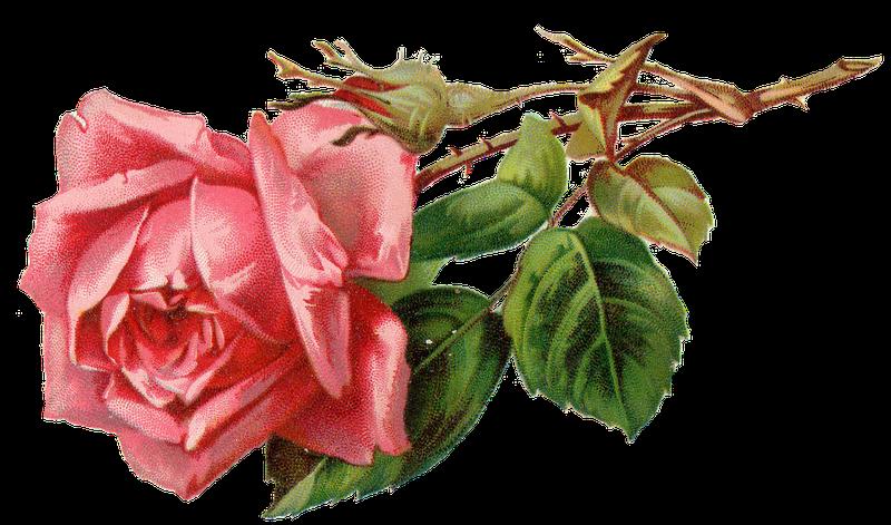 Vintage Flower clipart pink rose Clker On  com at