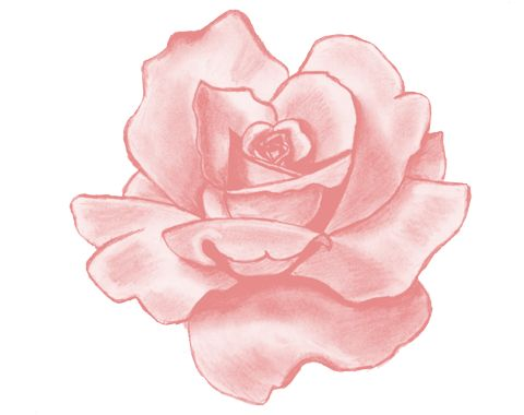 Rose clipart png tumblr #10