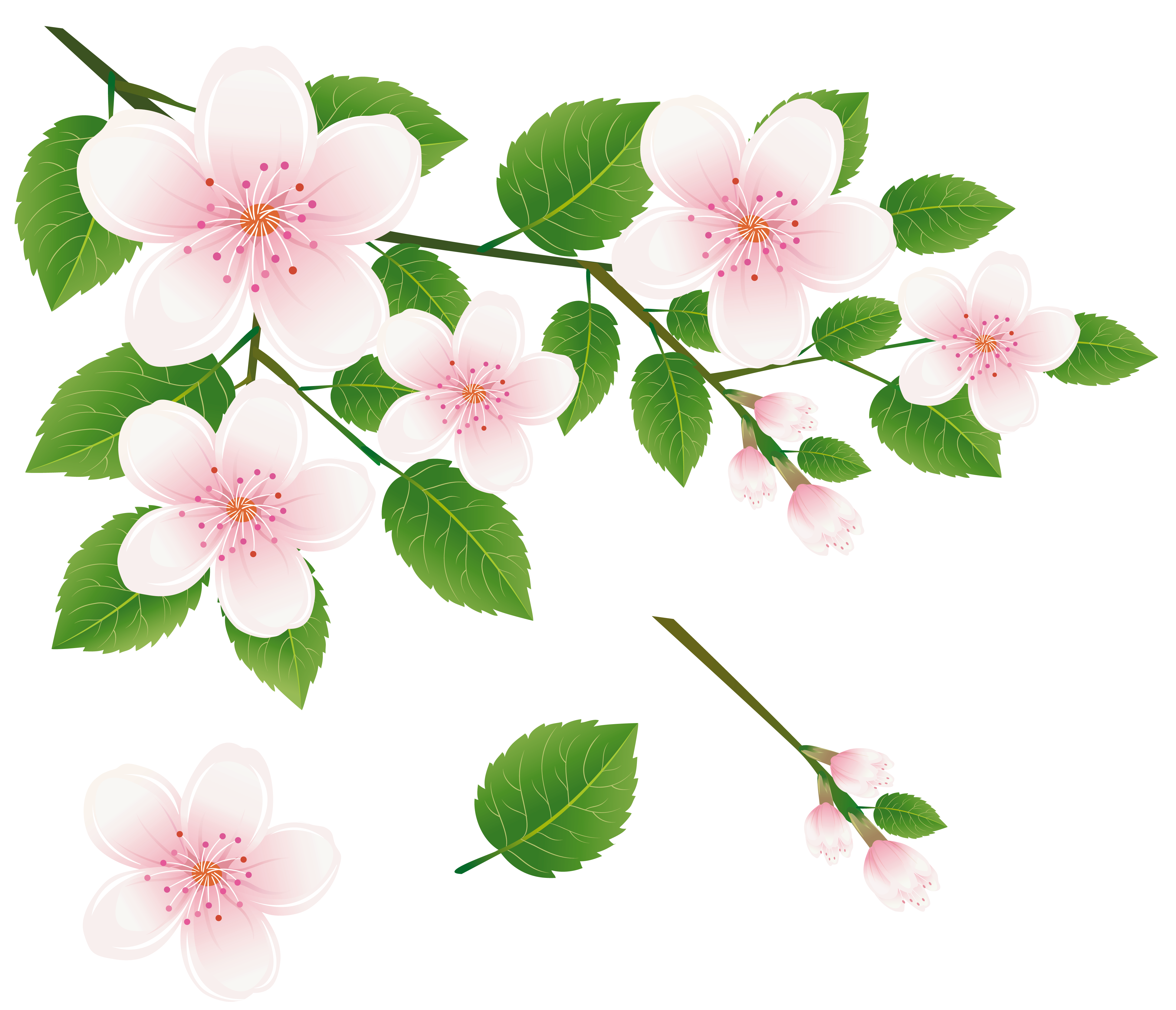 Pink Flower clipart flowering tree Clipart View size with Branch