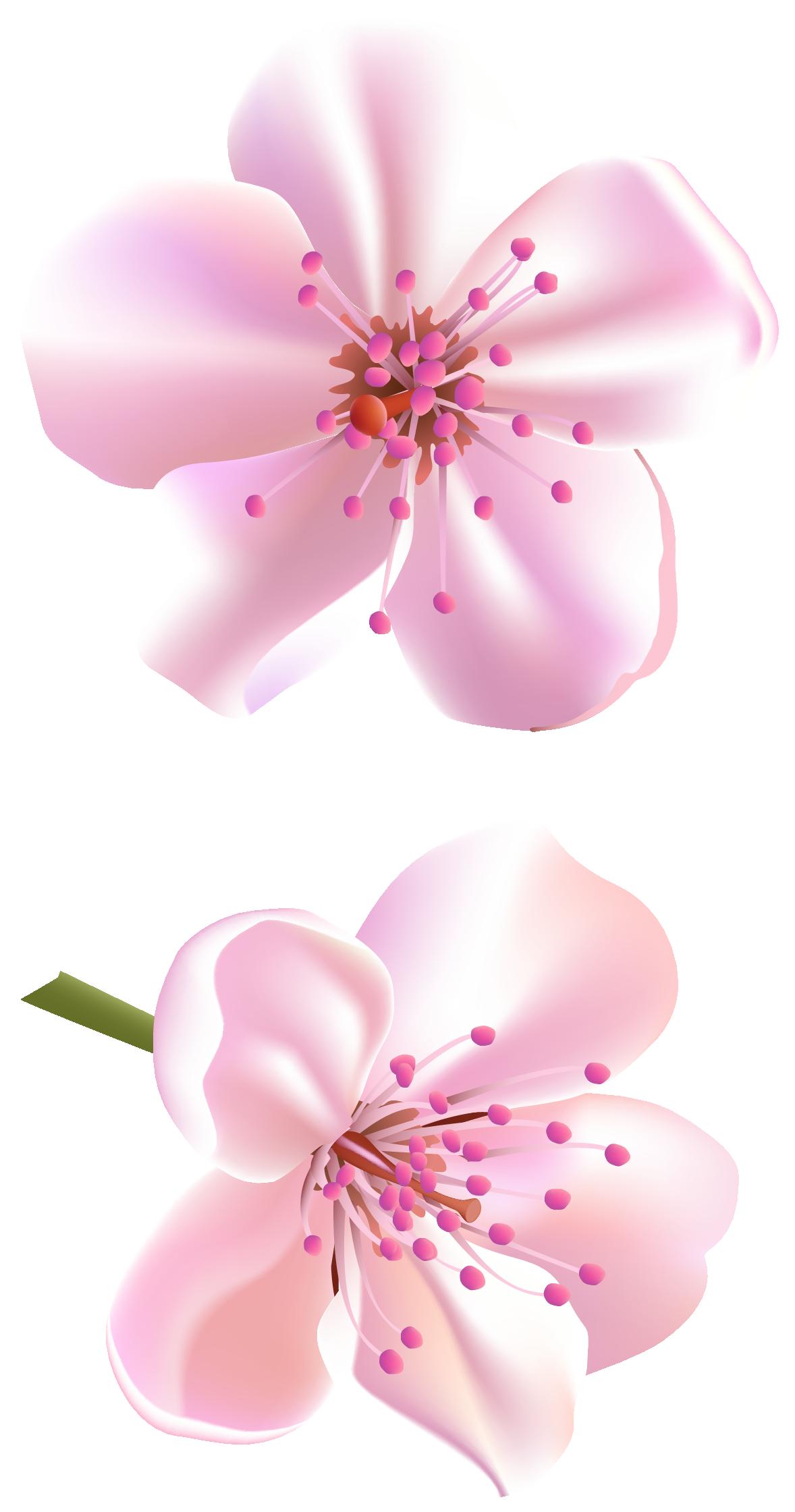Pink Flower clipart flowering tree Flowers Spring Tree Spring Clipart