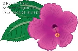 Pink Flower clipart hawaiian flower Clip Hibiscus a a Hawaiian
