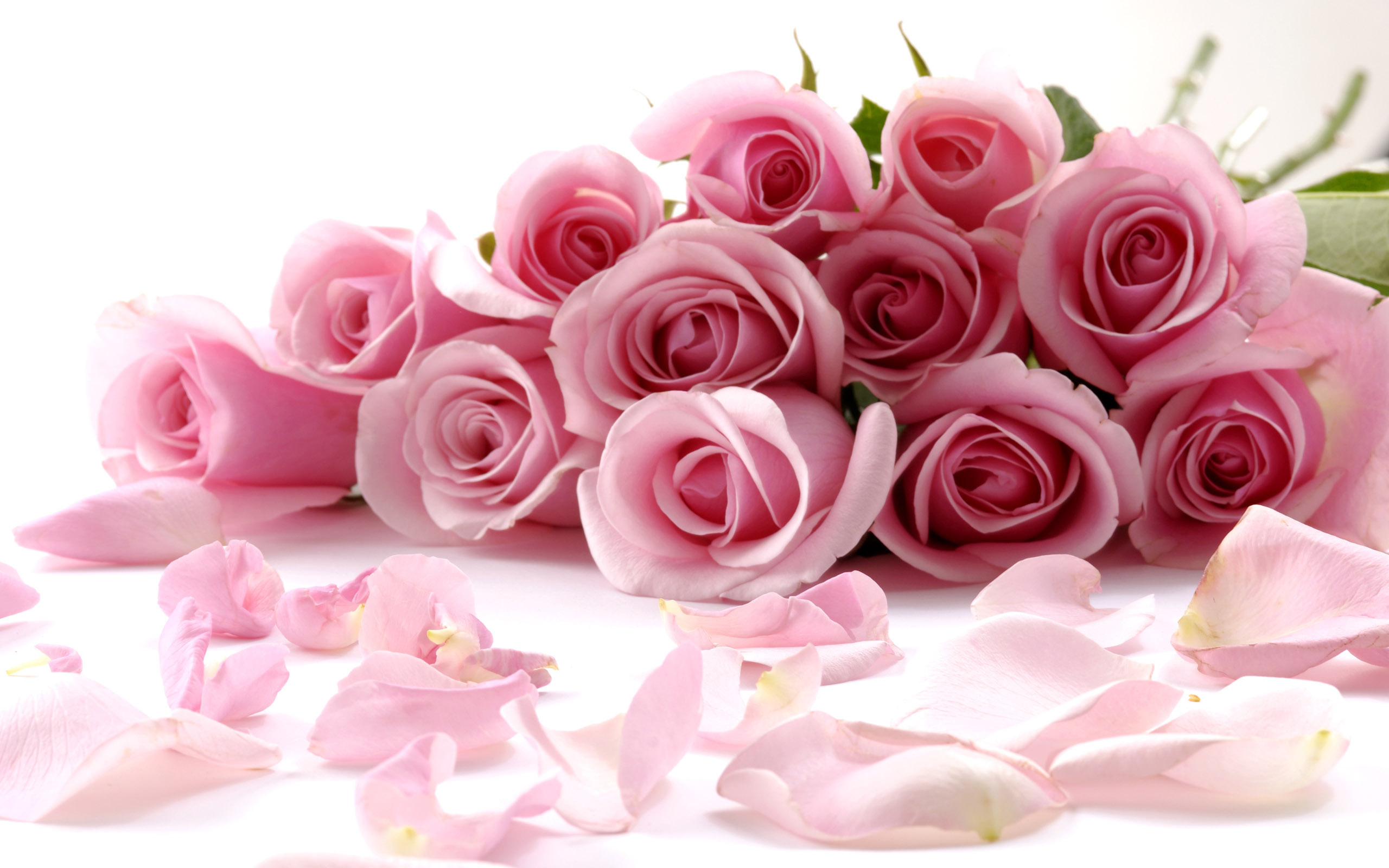 Pink Flower clipart light pink rose Wallpaper Light Beautiful Pink Delicate