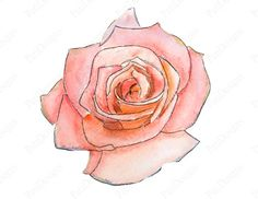 Pink Flower clipart light pink rose More PatiDesigns by wonderful Fete