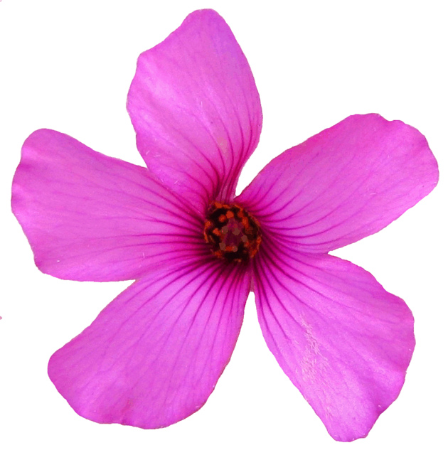 Pink Flower clipart little flower Download little flower Sharing! Pink