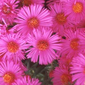 Pink Flower clipart pink colour Colour Flower flower flower colour