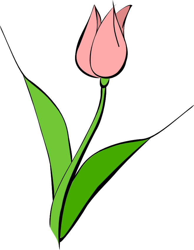 Pink Flower clipart pink tulip Art Free Free Download on