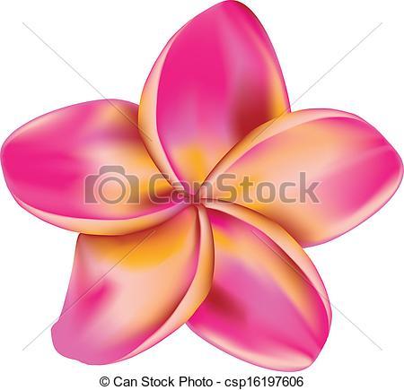 Pink Flower clipart plumeria Plumeria  Clipart Pink flower