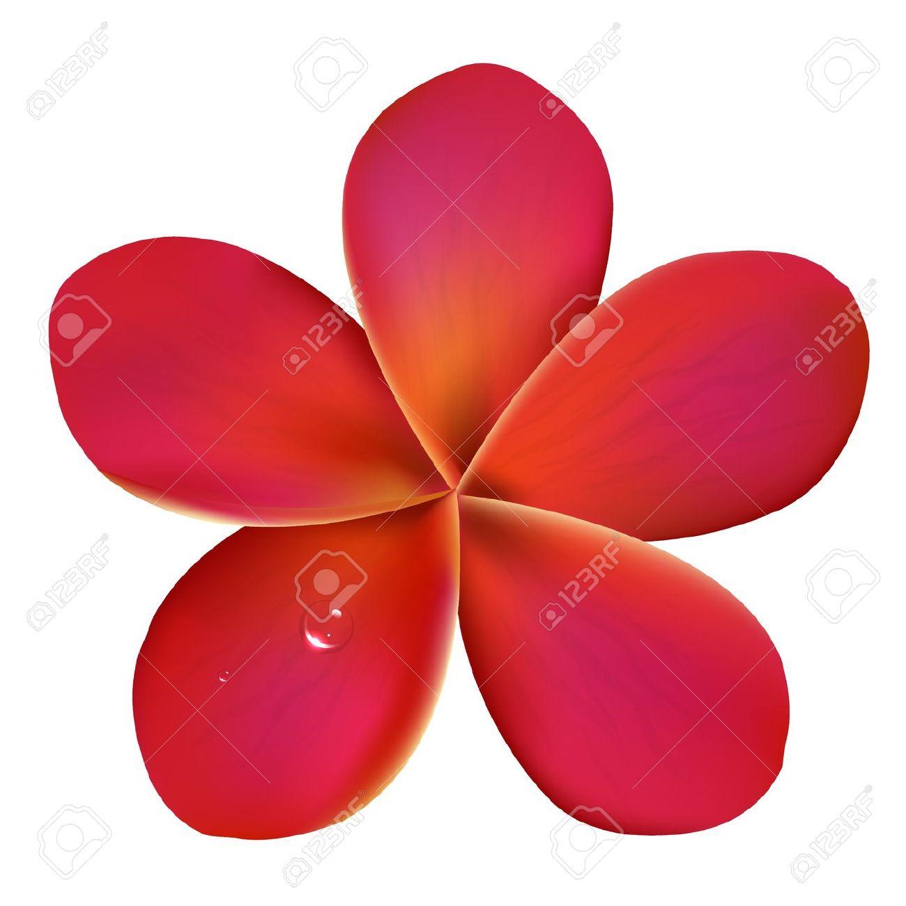 Pink Flower clipart plumeria Plumeria  Isolated Clipart Background