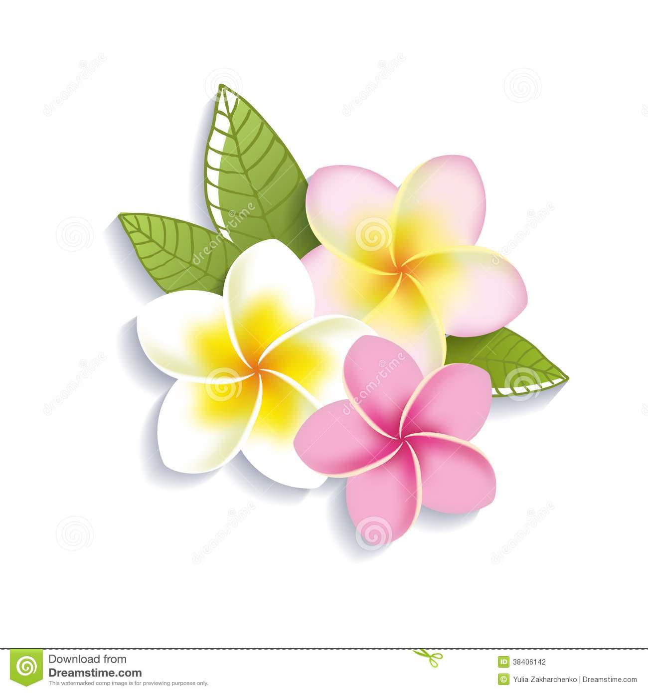Yellow clipart plumeria Stock A On A Plumeria