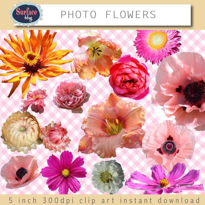 Pink Flower clipart real Supplies clipart clip clipart clip
