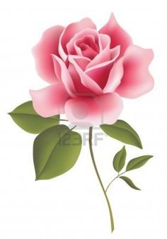 Pink Flower clipart real On Pink images And roses