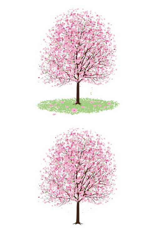 Blossom clipart pink blossom Pink with tree A Cherry