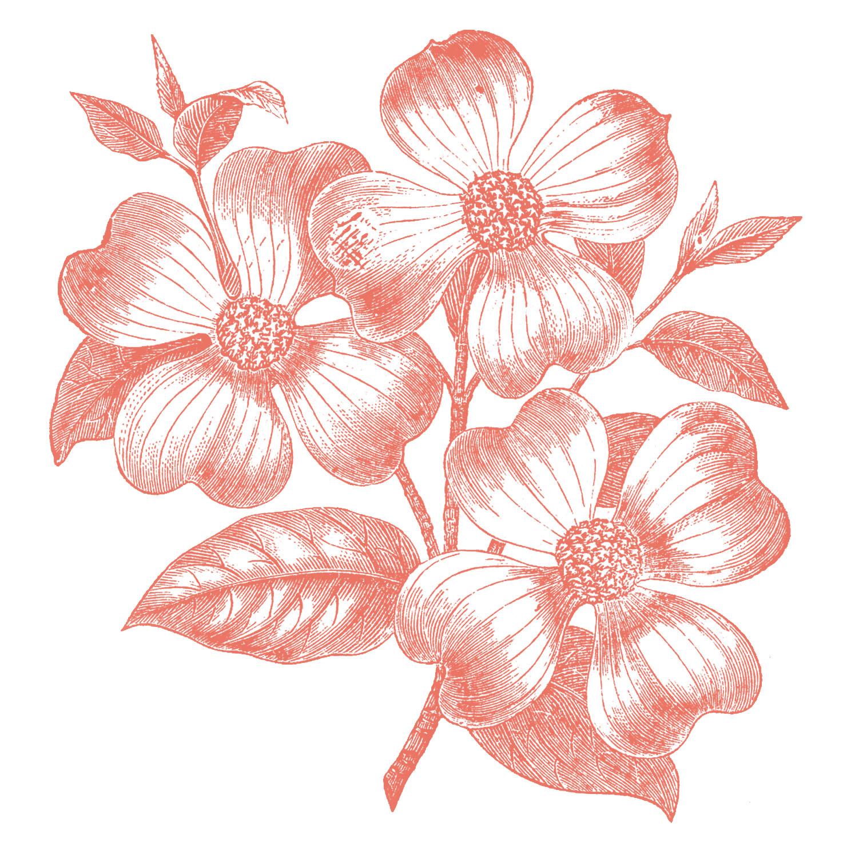 Vintage Flower clipart colored Vintage 2 Fairy Images Flowers