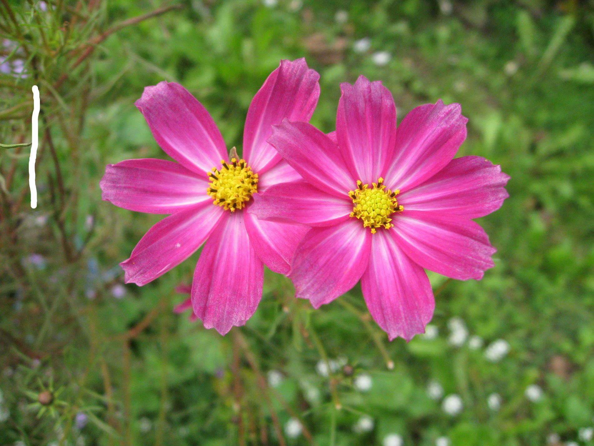Pink Flower clipart wallpaper Hd HdFlowerWallpaper Clipart clipart Flowers