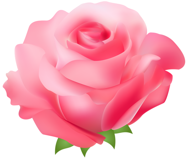 Pink Rose clipart #7