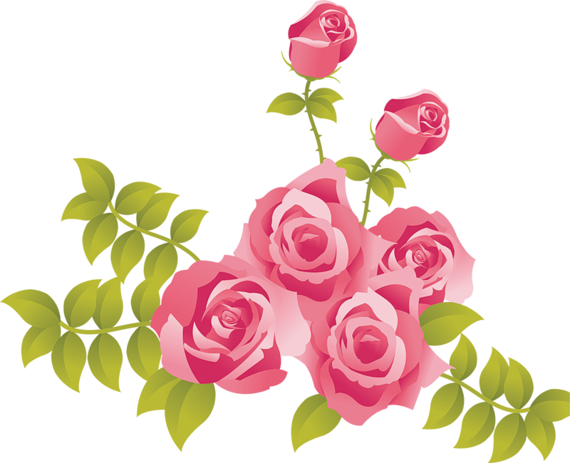 Pink Rose clipart #9