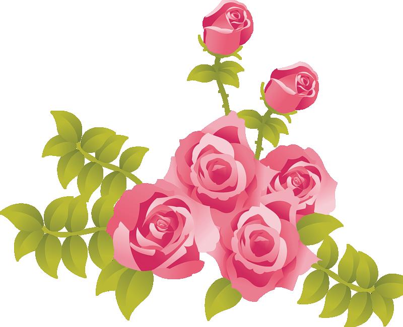Pink Rose clipart Pink Rose rose Pink Fans