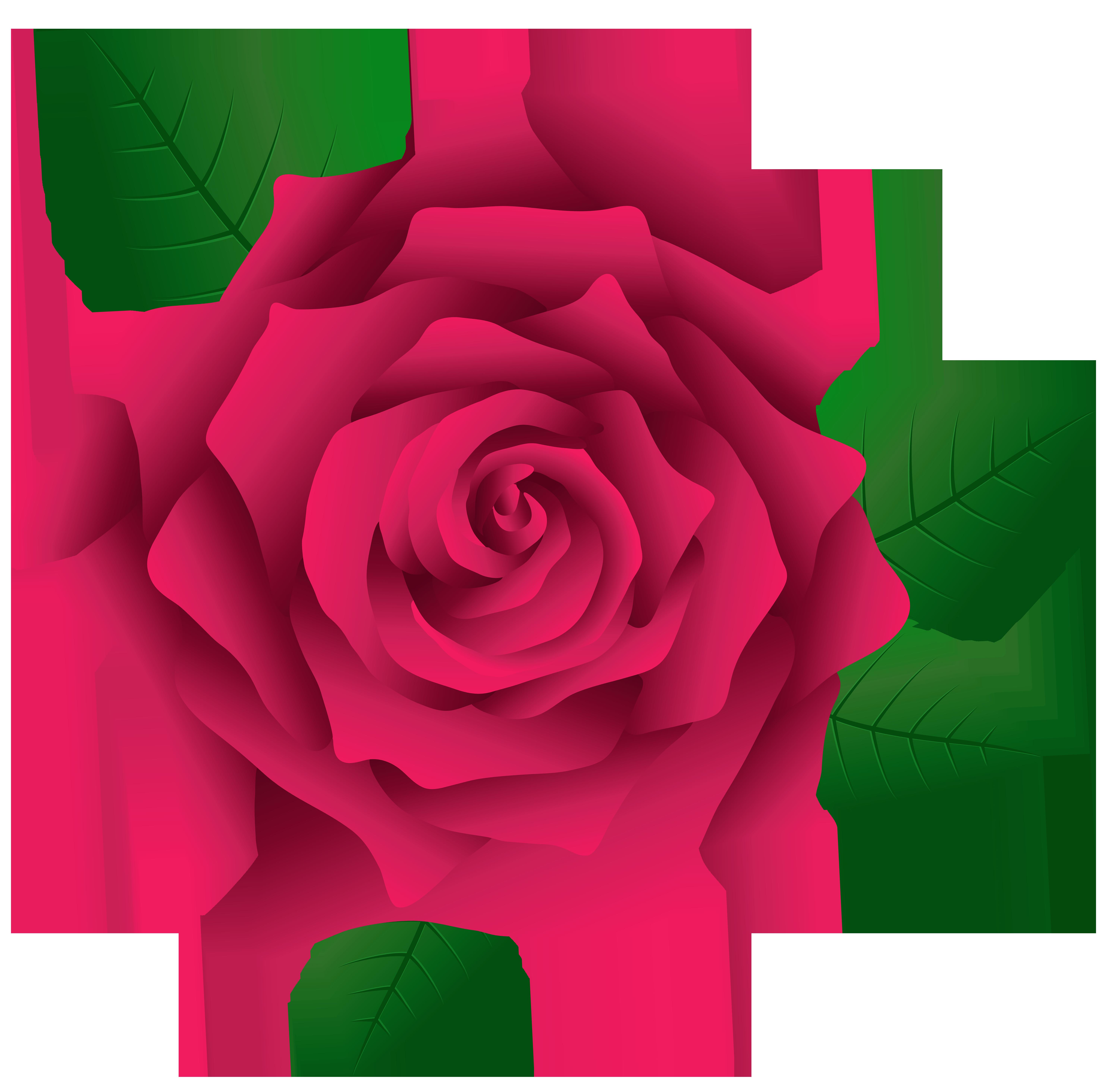 Rose clipart pink rose #7