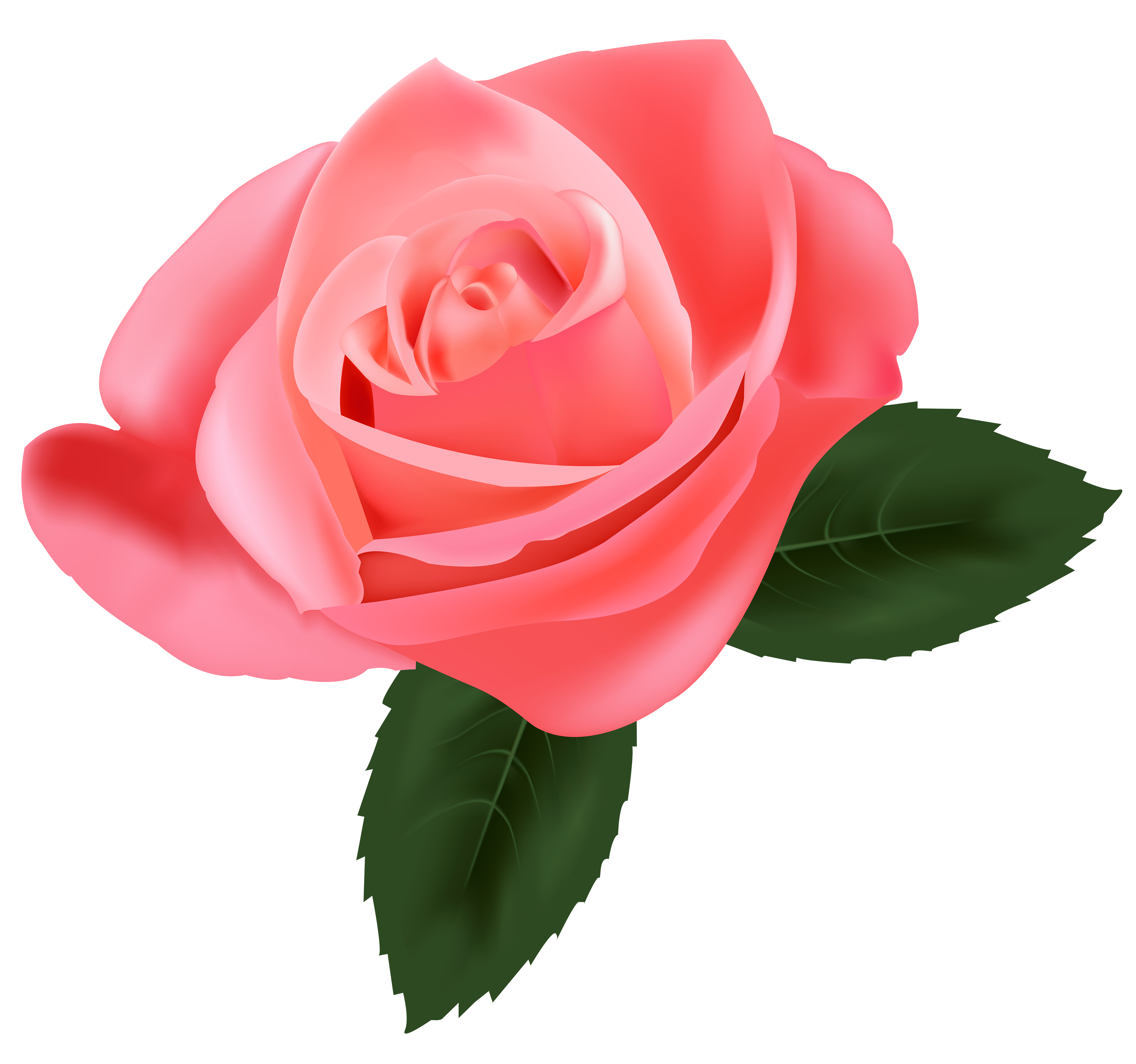 Pink Rose clipart #15