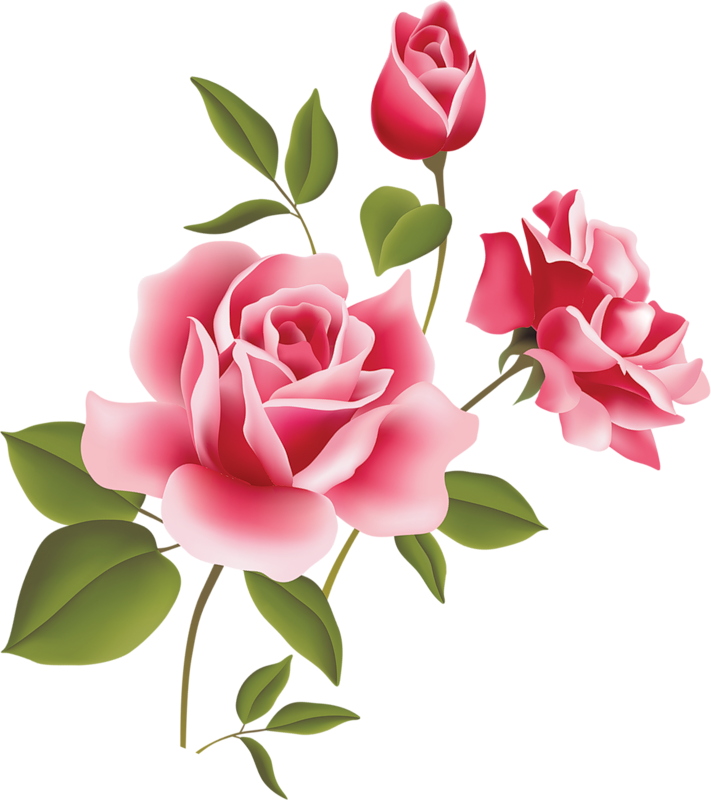 Pink Rose clipart #2