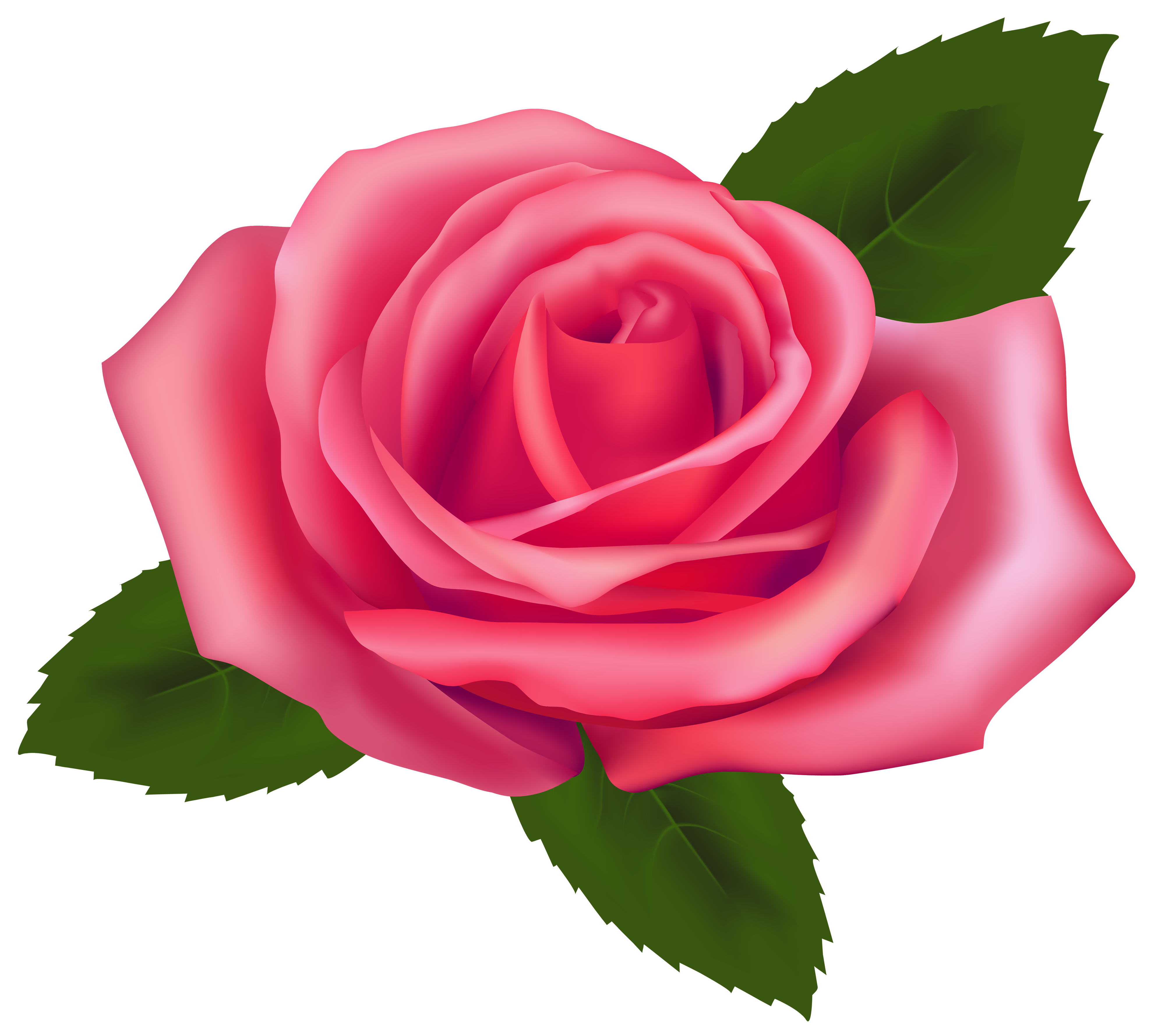 Pink Rose clipart #12