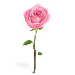 Pink Rose clipart #5