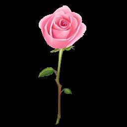 Pink Rose clipart Rose Free Rose Panda Clip
