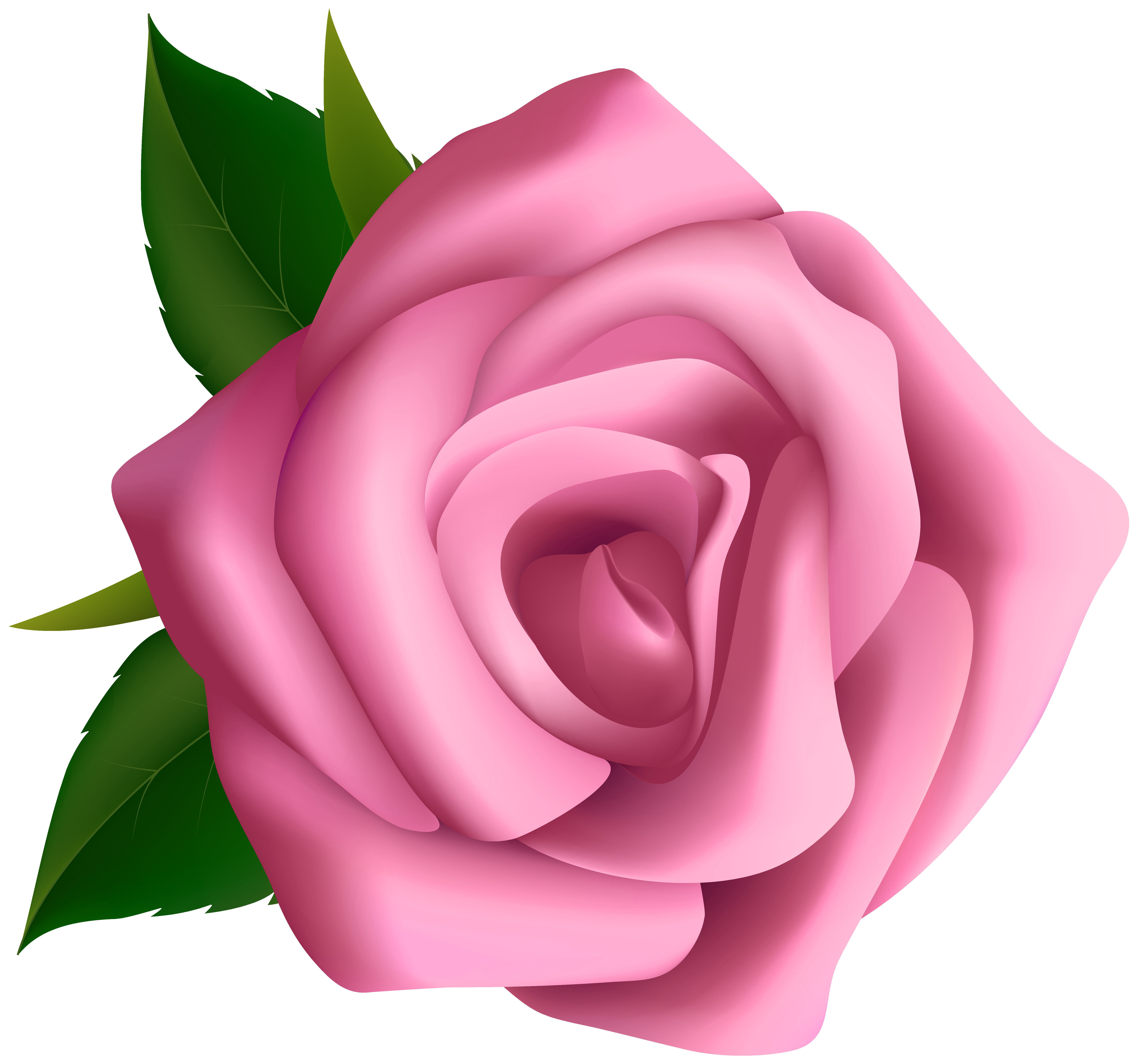 Pink Rose clipart #14