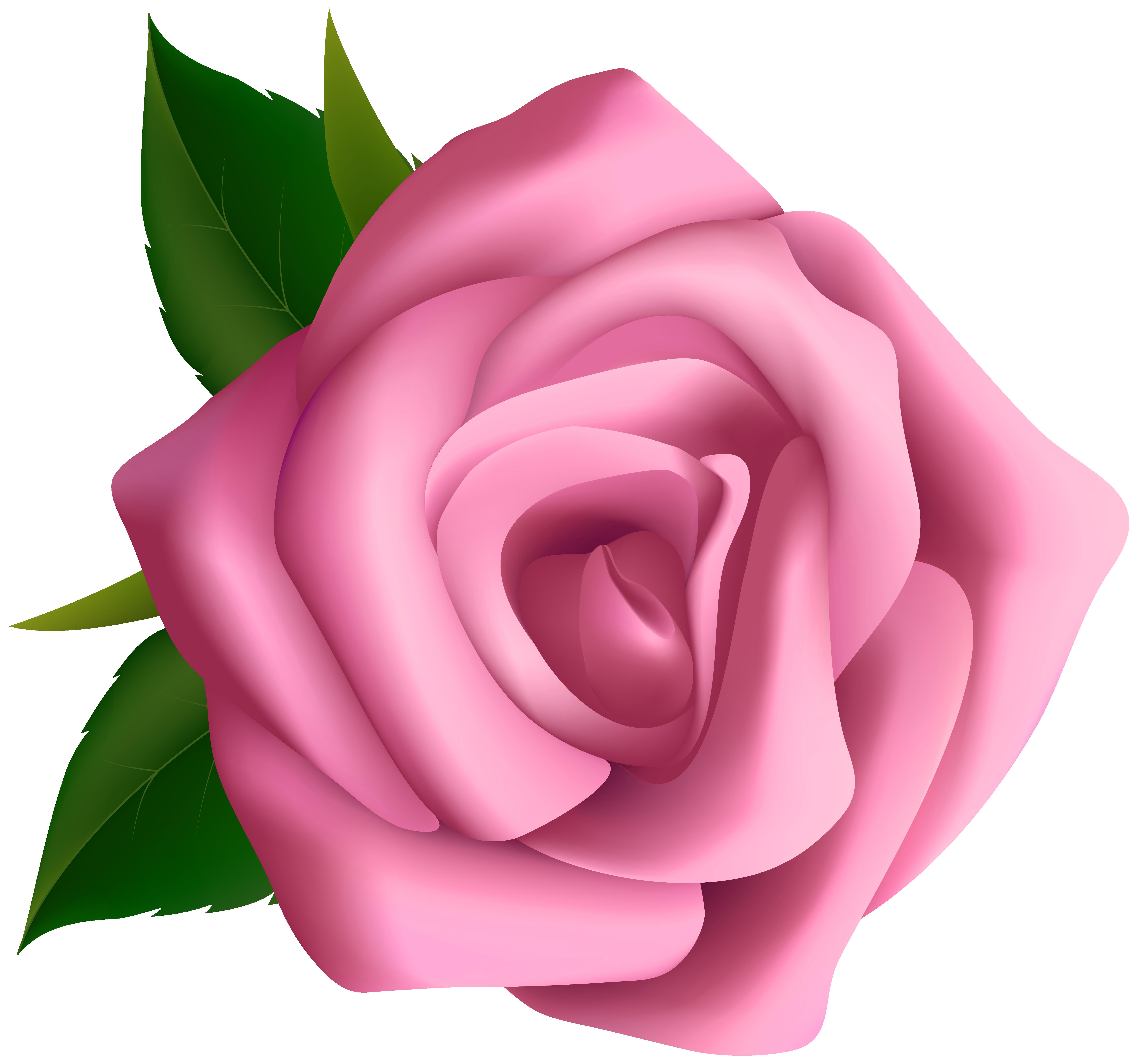 Rose clipart pink rose #9