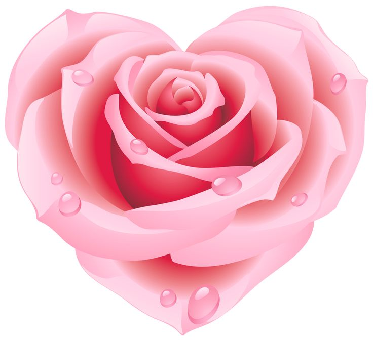 Pink Rose clipart #4