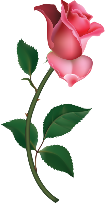 Pink Rose clipart #6