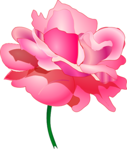 Pink Rose clipart clip No Shadow Clip Rose