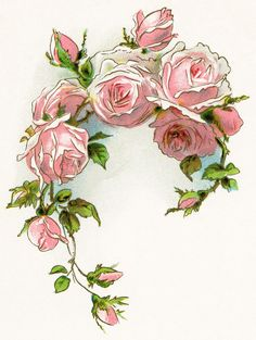 Pink Rose clipart lily From pink page ninth