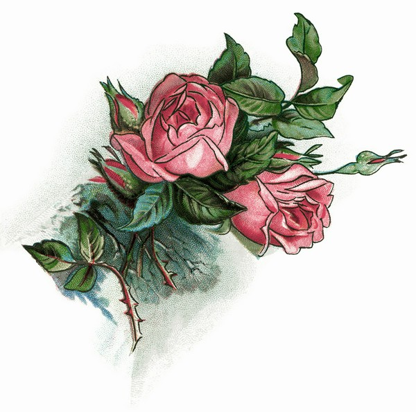 Pink Rose clipart lily Vintage art  free rose