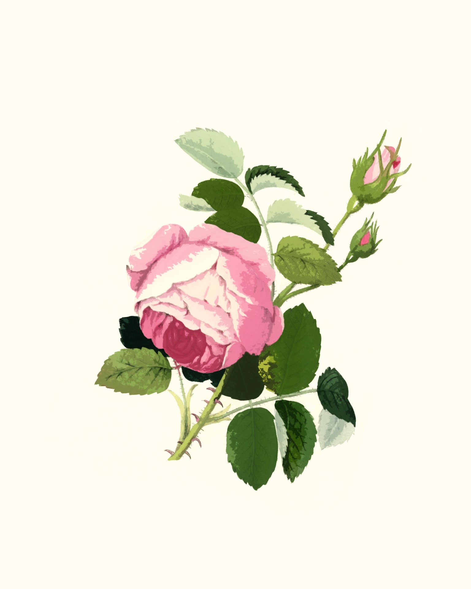 Pink Rose clipart public domain Domain Clipart Stock Rose Pictures