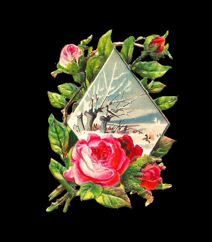 Pink Rose clipart rose bush Pink in Clip  Flower