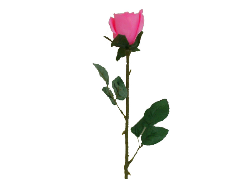 Pink Rose clipart stalk Rose Clipart of rose long
