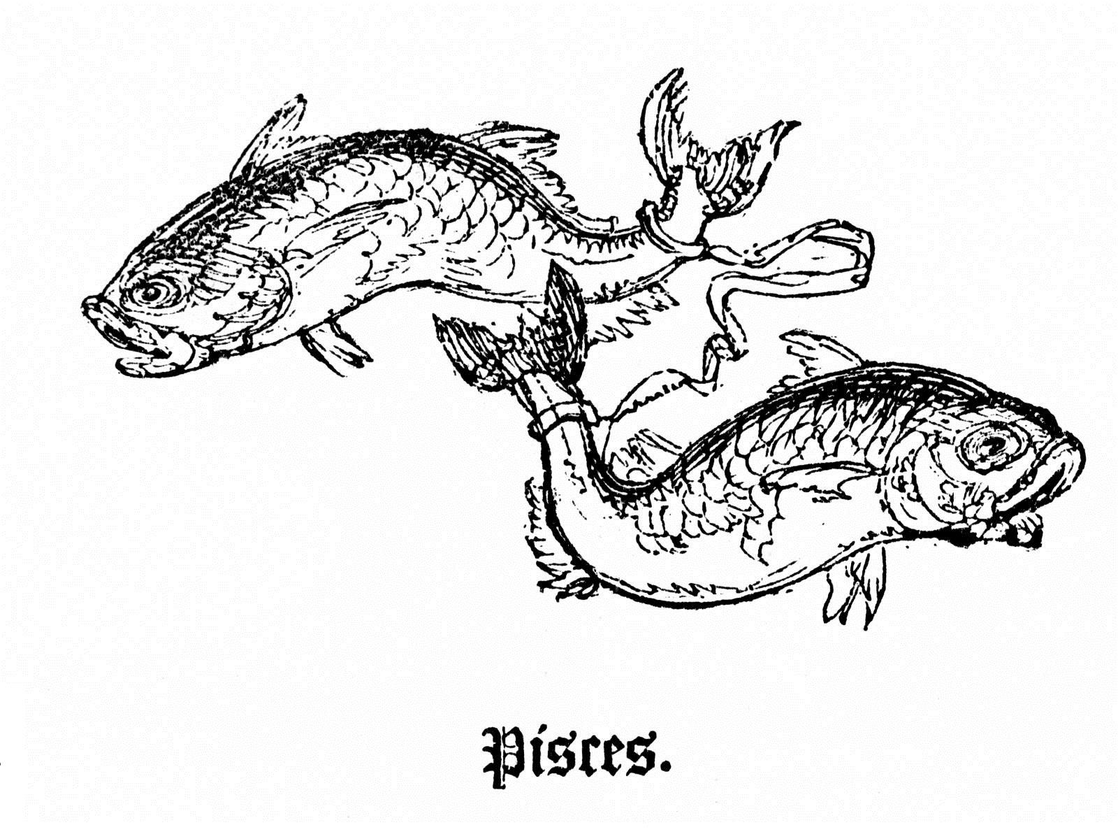 Pisces clipart pisces star sign #8