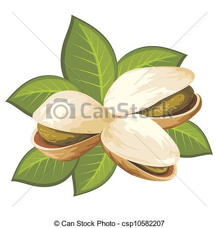 Pistachio clipart 2 nuts 357 Clipart pistachio