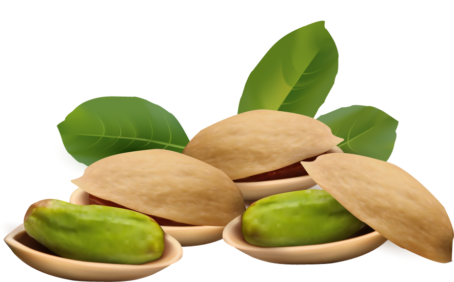 Almond clipart nuts Clipart Nuts Pistachio Clipart Nuts