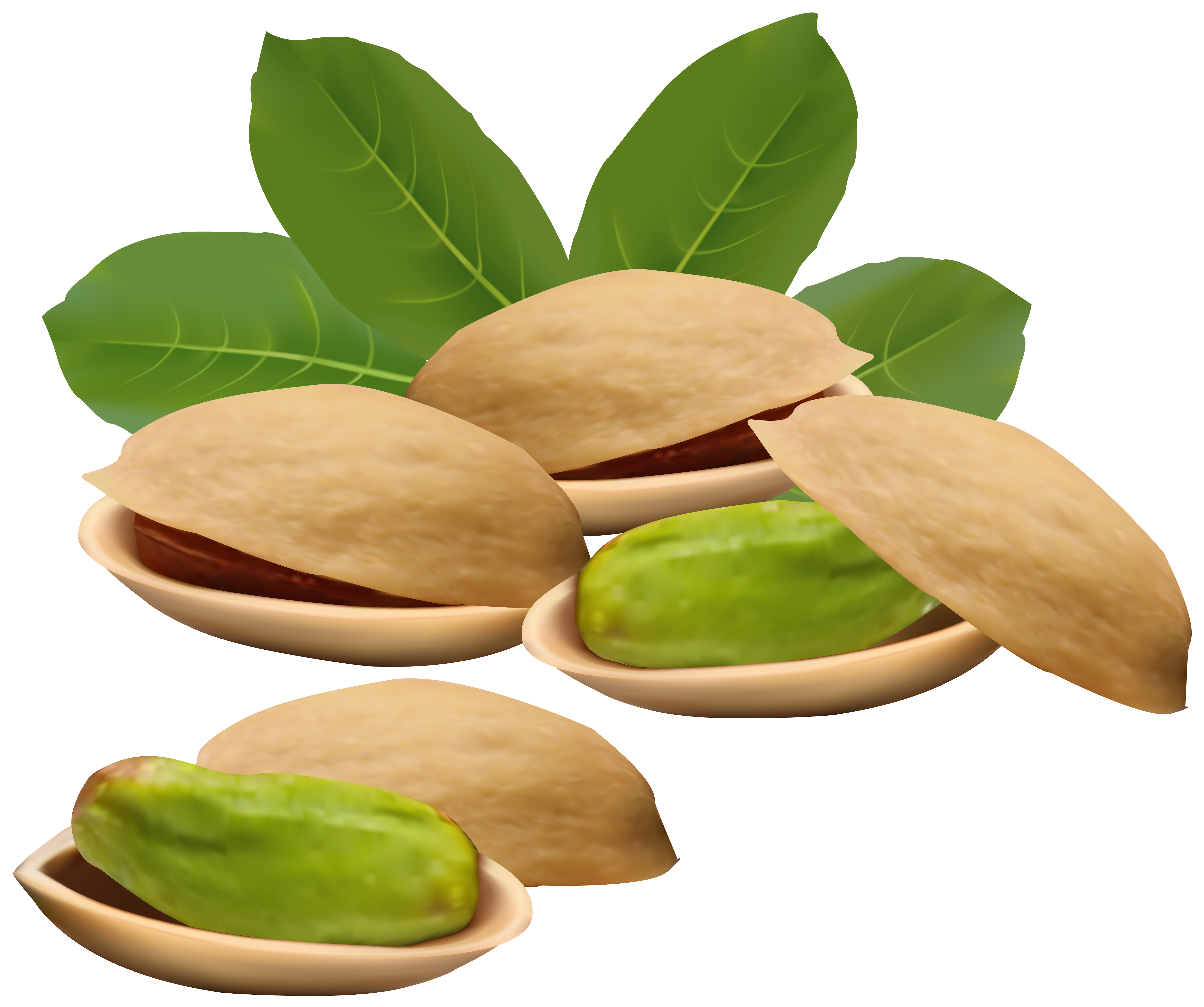 Pistachio clipart PNG Yopriceville View Image Nuts