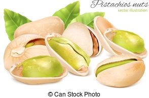 Pistachio clipart vector  nuts Vector Pistachio with