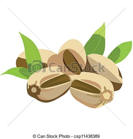 Pistachio clipart vector Art pistachio leaves Vector nuts