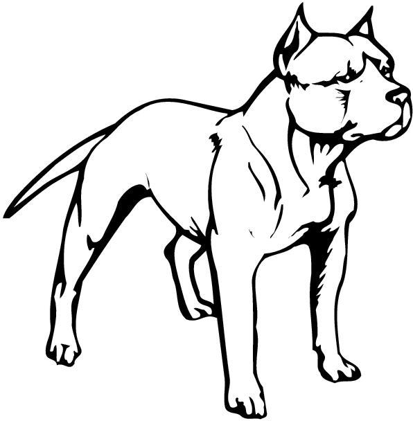 Pit Bull clipart american pitbull Free clip Free art –