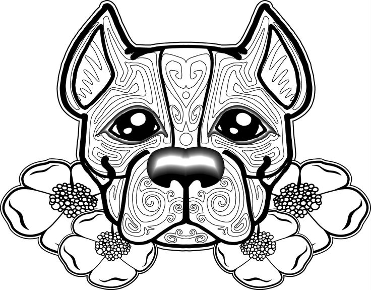 Pitbull clipart coloring page Coloring 81 free pages pages