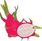 Pitaya clipart chinese dragon Clip Hylocereus Vector Fruit Dragon